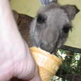 070131ワイルドライフパークでカンガルーに餌をあげる。