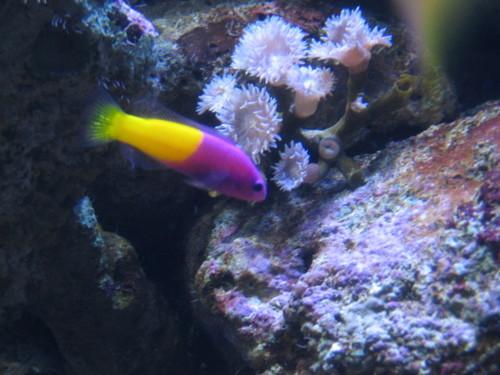 070130シドニー水族館で撮影