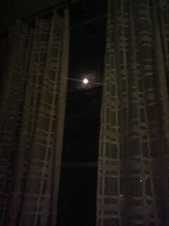 月見です。